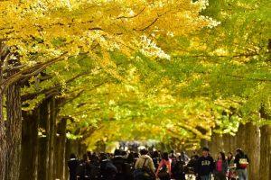 黄葉紅葉まつり・秋の夜散歩