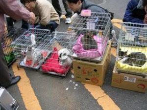 三鷹動物祭