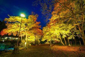御岳渓谷紅葉のライトアップ