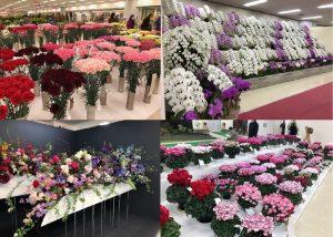 第69回関東東海花の展覧会