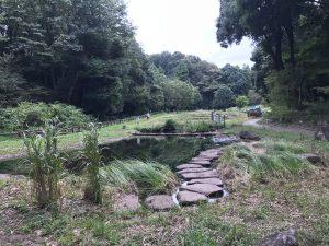 忠生公園の定例自然観察会