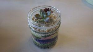 むさしの自然観察園「ガラスのポットで多肉植物を育てよう」