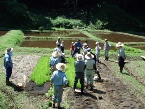 里山散策と田植え参加者募集