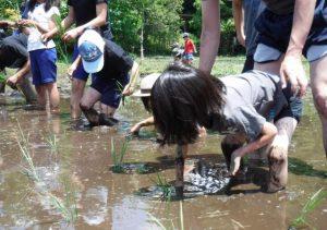 大沢の里で親子「田植え体験」を開催します